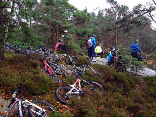 Cyklar i skogen